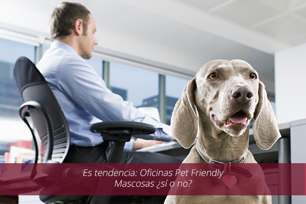 Es tendencia: Oficinas Pet Friendly – Mascosas ¿sí o no?